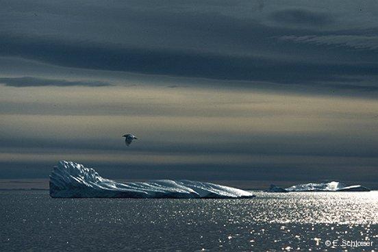 Old iceberg, Greenland